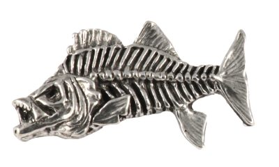 Striped Bass Skeleton Fish